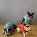 Sole Salvo For Purl Soho: Lucky Dog Sweater